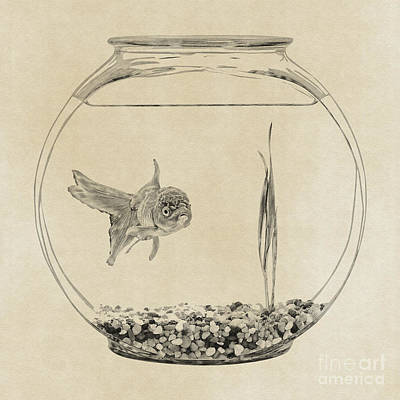 Goldfish Digital Art - Silent Treatment by Olga Hamilton