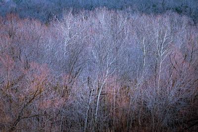 Silent Trees Art Print
