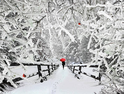 Photograph - Silent Walk In The Snow by Debra and Dave Vanderlaan