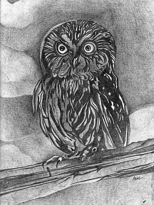 Animals Drawing - Silent Watch by Anne Rickard