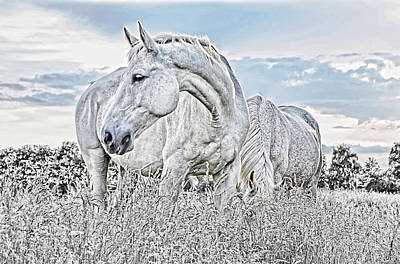 Hanoverian Photograph - Silent White Summer by Joachim G Pinkawa