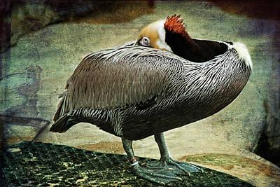 Pelikan Digital Art - Silent by Zsuzsanna Szugyi