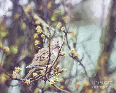 Photograph - Silently Waiting - Mourning Dove  by Kerri Farley