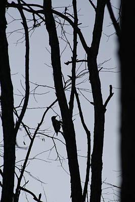 Photograph - Silhouette by Aggy Duveen