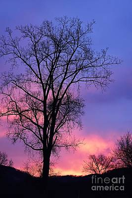 Silhouette At Dawn Art Print by Larry Ricker