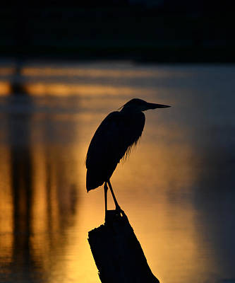 Silhouette At Sunset Great Blue Heron Art Print