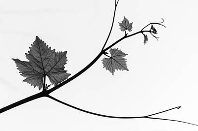 Photograph - Silhouette by Daniel Kulinski