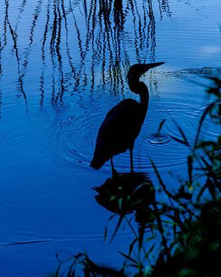 Photograph - Silhouette In Blue by Stephanie Maatta Smith