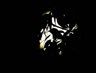 Photograph - Silhouette by Jean Evans