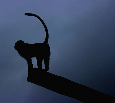 Red Monkey Photograph - Silhouette by Martin Newman
