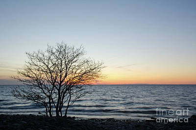 Photograph - Silhouette Of A Bare Tree By The Coast At Sunset by Kennerth and Birgitta Kullman