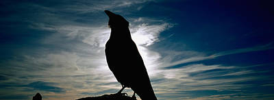 Silhouette Of A Raven At Dusk Art Print by Panoramic Images