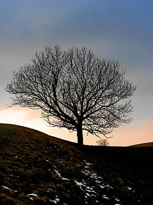 Silhouette Of A Tree On A Winter Day Print by Christine Till