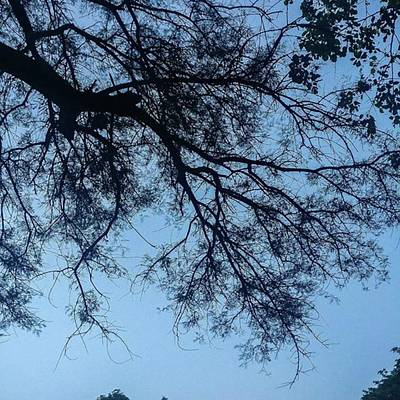 Photograph - #silhouette Of A #tree #sky #delhi by Ankit Agrawal