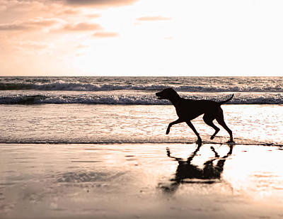 Silhouette Of Dog On Beach At Sunset Art Print