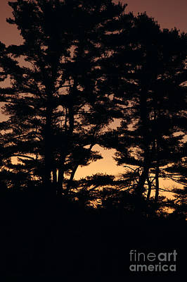 Silhouette Of Forest  Art Print by Erin Paul Donovan