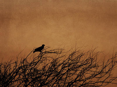 Photograph - Silhouette Of Hawk by Charles McKelroy