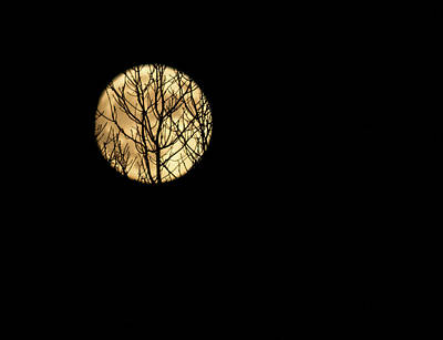 Silhouette Of Leafless Barren Tree Branches On Creeping Across On Supermoon Art Print