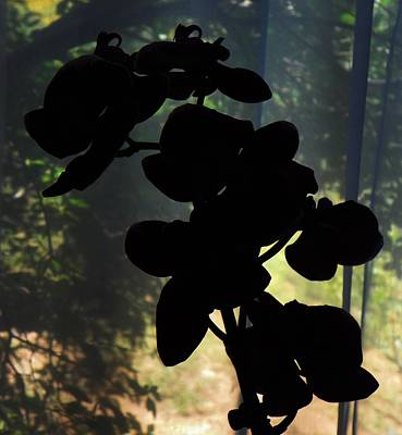 Silhouette Of Orchid Flowers Art Print