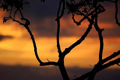Photograph - Silhouette Of Single Tree At Sunset  by Matt Harang