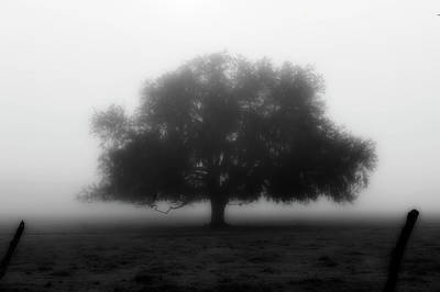Photograph - Silhouette Of Tree In Field by Dan Friend