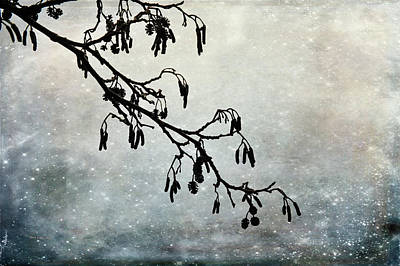 Photograph - Silhouette by Randi Grace Nilsberg