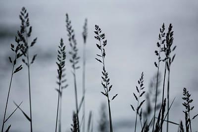 Photograph - Silhouette by Ryan Heffron