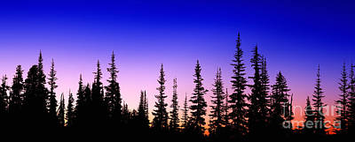Photograph - Silhouette Subalpine Firs At Sunset by Warren Photographic