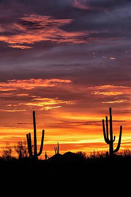 Photograph - Silhouette Sunset In The Sonoran  by Saija Lehtonen