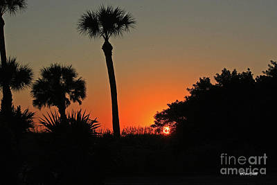Photograph - Silhouette Sunset by Terri Mills