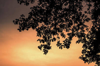 Silhouette Tree In The Dawn Sky Art Print by Jingjits Photography