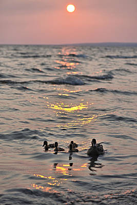 Photograph - Silhouetted Ducks by Andrew Miles