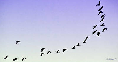 Onward Photograph - Silhouetted Flight by Brian Wallace