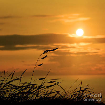 Photograph - Silhouetted Grasses by Paul Davenport