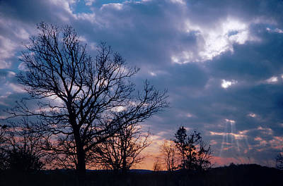 Photograph - Silhouetted Oak And Clouds by Bernard Lynch