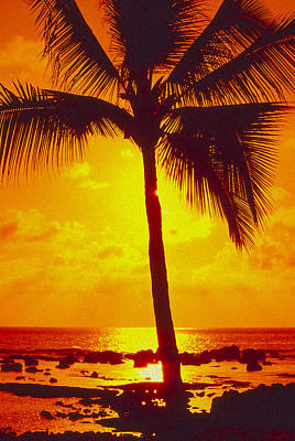 Photograph - Silhouetted Palm by Ron Dahlquist - Printscapes