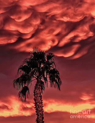 Photograph - Silhouetted Palm Tree by Robert Bales