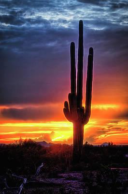 Photograph - Silhouetted Saguaro Sunset  by Saija Lehtonen