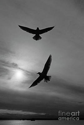 Photograph - Silhouetted Seaulls by Jim Corwin