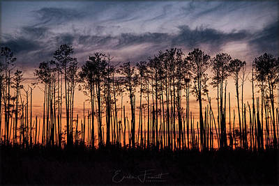 Photograph - Silhouetted Sunset by Erika Fawcett