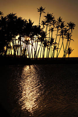 Photograph - Silhouetted Sunset by Pamela Walton