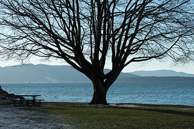 Photograph - Silhouetted Tree And Bellingham Bay by Tom Cochran
