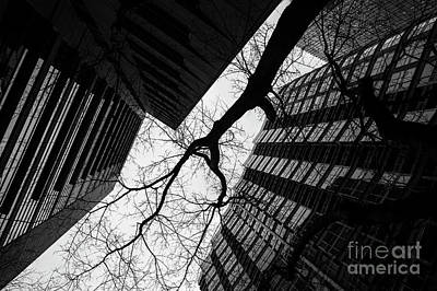 Photograph - Silhouetted Tree And Buildings  by Jim Corwin