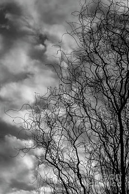 Photograph - Silhouetted Tree Cloud Patterns by Jim Corwin