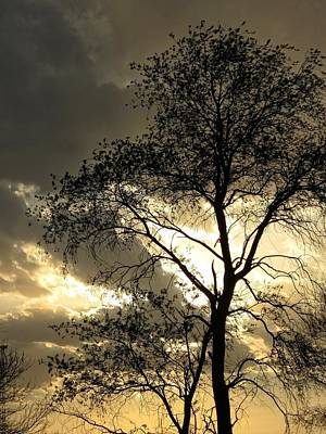 Photograph - Silhouetted Tree by Kyle West