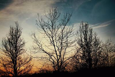 Photograph - Silhouetted Trees At Sunset by Patricia Strand