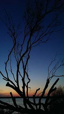 Photograph - Silhouetted Twilight by Liza Eckardt