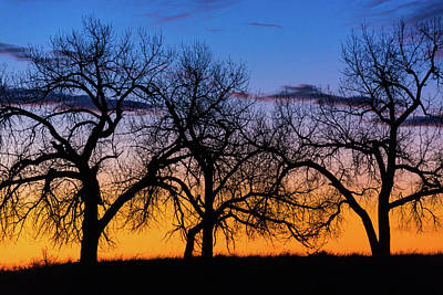Photograph - Silhouettes Of A Spring Sunrise by John De Bord