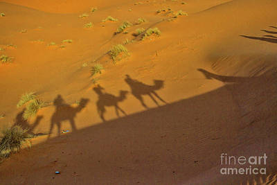 Photograph - Silhouettes Of Camels In The Desert by Patricia Hofmeester