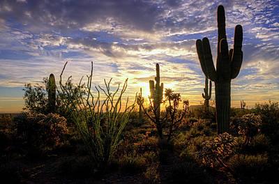Photograph - Silhouettes Of The Sonoran by Saija Lehtonen